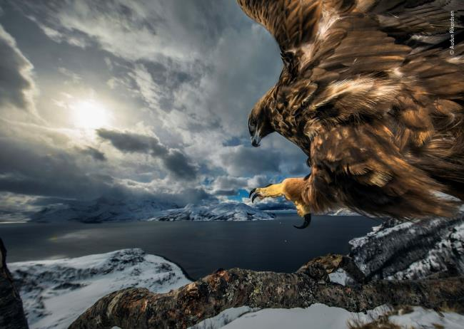 Photographic exhibition: Wildlife Photographer of the Year thumbnail