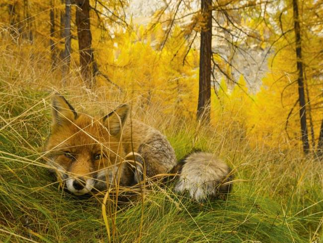 On Assignment, a wild life - Photos by Stefano Unterthiner thumbnail