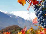 Tutti i colori del vino