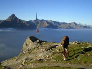 Hiking with donkeys