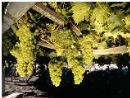 Alla scoperta dei vitigni più alti d'Europa