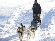 Dog sledding with the family