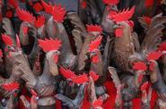 La Millenaria Fiera di Sant'Orso