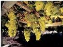 Das Mont-Blanc-Tal hat Spitzenweine und Genüsse auf höchstem Niveau zu bieten
