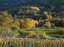 Giro delle cantine: alla scoperta dei vini valdostani