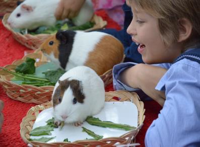 L 39 artisan i negozi dell artigianato valdostano di for Ccnl legno e arredamento artigianato