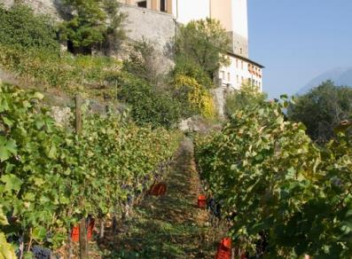 Vineyards near Siant-Pierre castle