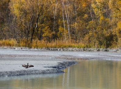 Cormorant on the shore of the lake