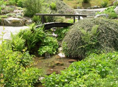 Stream and water-loving plants